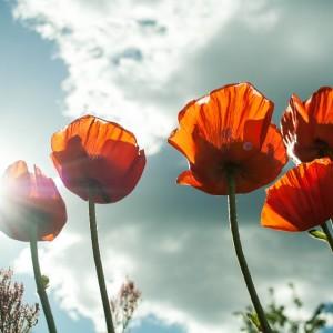 flower-399409_960_720